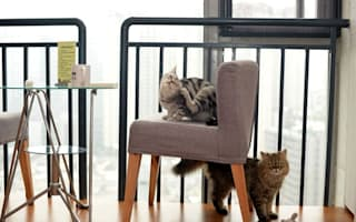 London's first cat cafe opens