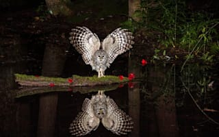 Stunning picture shows owl checking out its reflection