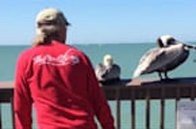 Good Samaritans Save Entangled Pelican