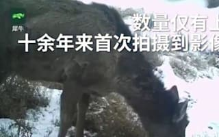 Horse or deer? Mysterious creature spotted in rural China