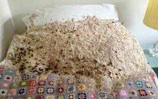 Wasp apocalypse: 5,000 move into spare room