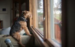 Basic dog training tips and aids