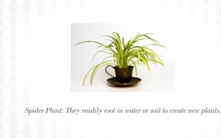 The best indoor plants that won't die on you