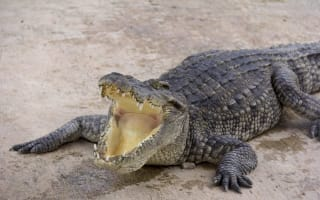 Tourist badly bitten while trying to take selfie with crocodile