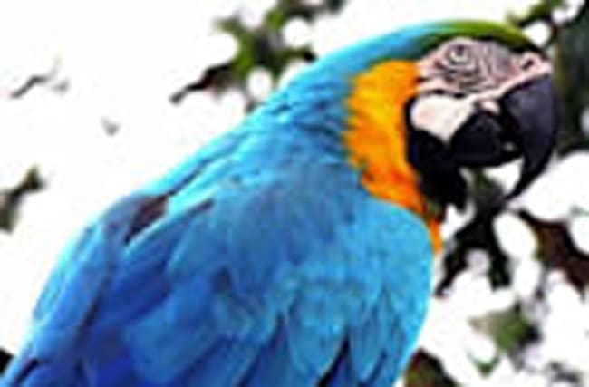 Parrot Exposes Cheating Husband (Kind of)