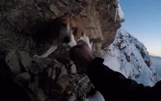 Dog finds own way off cliff edge after unsuccessful rescue
