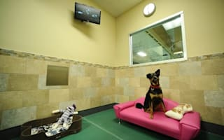Love hotel for dogs to open in Brazil