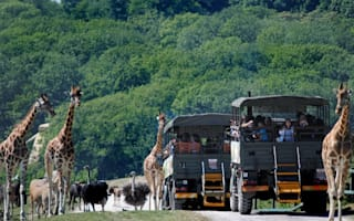Win! A glamping escape for six in Kent's Port Lympne Reserve