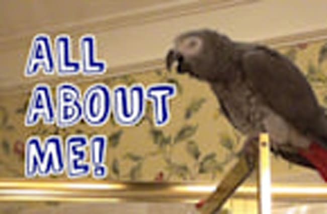Einstein the Parrot claims it's all about him!