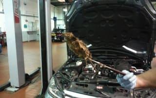 Mechanic finds dead rat in car engine bay