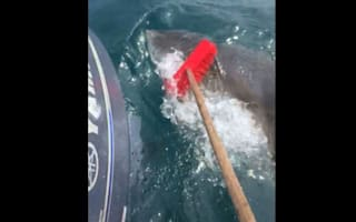 Fisherman fends off great white shark with broom