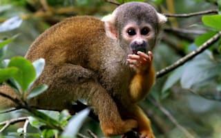 Monkeys help missing tourist survive nine days in the Amazon