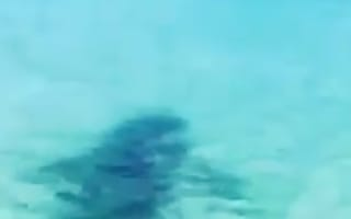 Great white shark lunges at jet skiers (video)