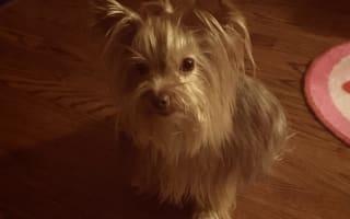 Man blames pet hotel for death of dog