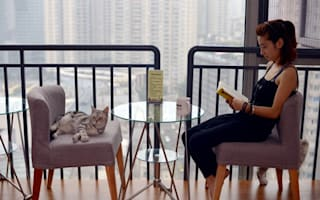 The purr-fect coffee shop? London cafe will have cats for you to pet