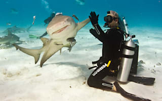 Smile for the camera! Shark gives diver high five