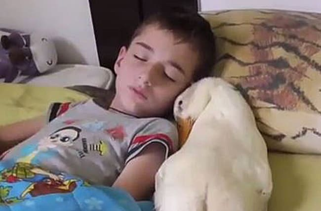 What does this boy do when he wakes up next to a duck?