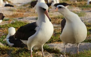 World's oldest-known wild bird returns to lay egg at 64
