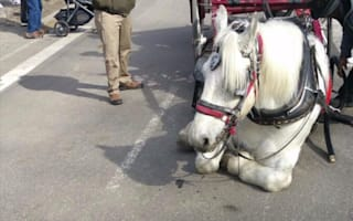 Carriage horse collapses in New York's Central Park