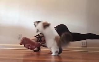Cat helps owner with yoga poses