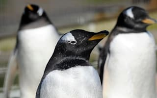 Bizarre objects eaten by Edinburgh Zoo's penguins revealed by surgery