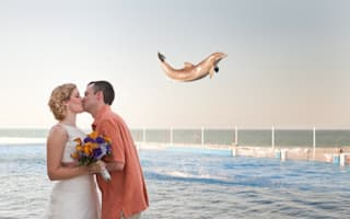 'Flying' dolphin photobombs newlyweds' first kiss picture