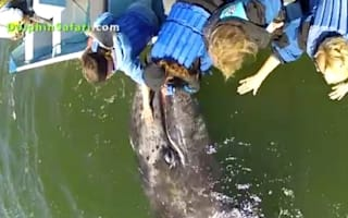 Video: Baby gray whale looking for a cuddle delights tourists
