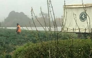 Farm worker caught urinating on Tesco vegetable field