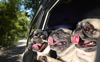 'Dogs in cars' calendar could be this year's must-have Christmas gift