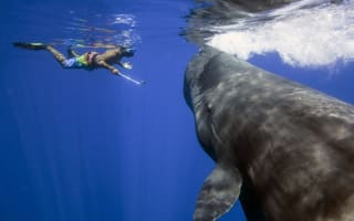 Lucky tourists swim with pod of sperm whales (video)