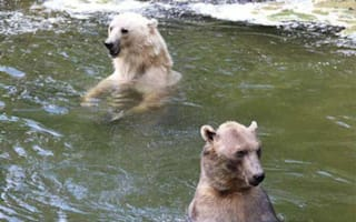 Bear shot dead at zoo after escaping with brother