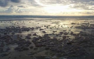 Thousands of jellyfish wash up on Cornwall beach