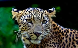 Girl killed by leopard after being dragged from her bed in India