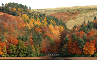 Signs of autumn appear in UK - and it's only 1st July
