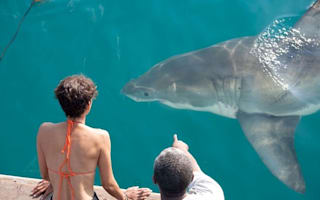 Bikini-clad Halle Berry gets very close to great white sharks in South Africa