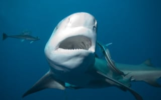 Man witnesses friend attacked and killed by shark