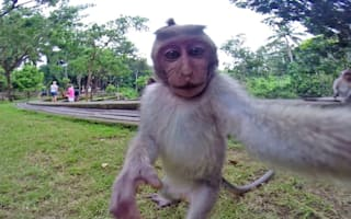 British tourist ambushed by selfie-taking monkey