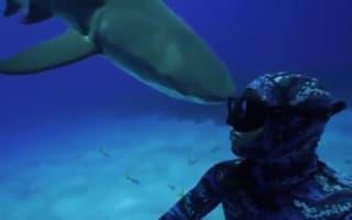 Terrifying moment bull shark headbutts diver