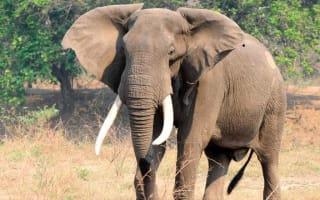 Drought-stricken Zimbabwe selling its wild animals