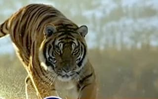 Tiger from Esso adverts dies age 22