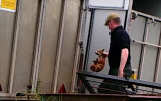 Probe launched into fox hunting group amid animal cruelty allegations