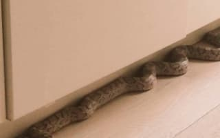 Woman finds huge snake in London kitchen