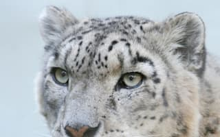 Oldest ever big cat skull found in Himalayas dates back six million years