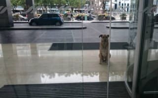 Flight attendant adopts stray dog that always waited outside her hotel