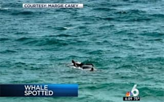 Probe after swimmers spotted 'riding' sick whale that died off Florida coast