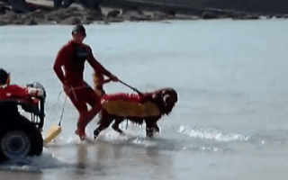 Famous Cornwall beach lifesaving dog dies