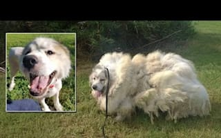 Neglected dog looks unrecognisable after getting hair shaved