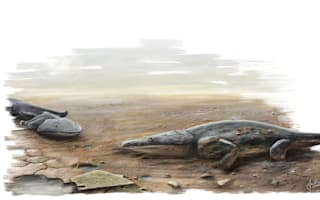 Ancient killer newt was 'the size of a car' say scientists