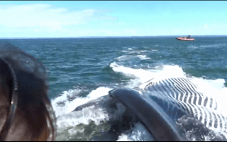 Giant fin whale slips under tourist boat
