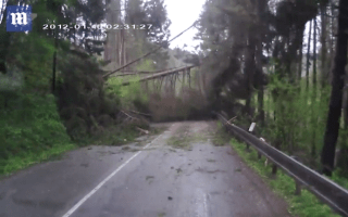 People trapped as trees fall around their car